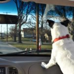 40b_-_watching_for_doggie_friends_on_way_to_car_wash