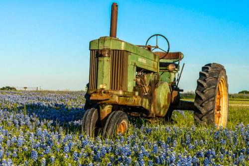 Tractor-in-Bluebonnets